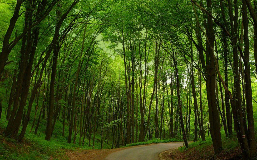 Irány a hűvös erdő!