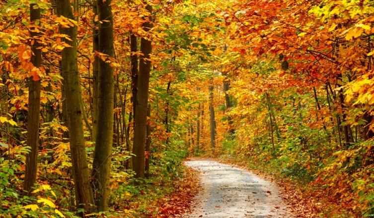 Egy kellemes őszi túra Visegrádon?